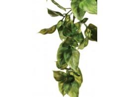 Рослини для тераріуму