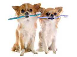 Уход за полостью рта собак