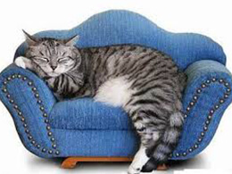 М'які місця для котів