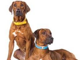 Нашийники для собак