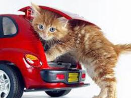 Переноска для котів
