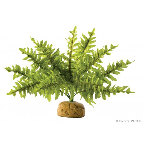 Растен. подст.Boston Fern, small PT2990