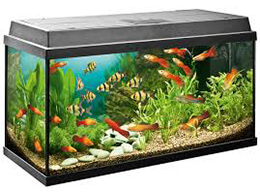 Підставки під акваріуми
