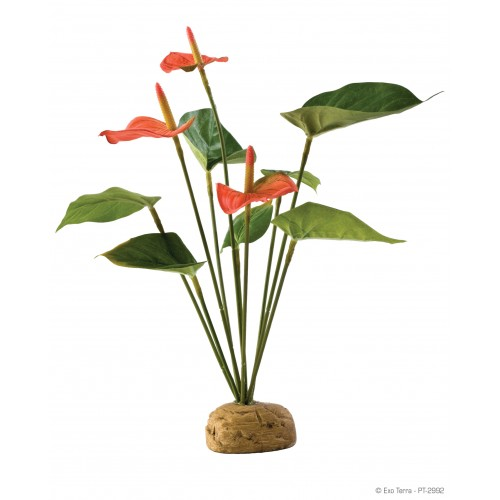 Растен. подст. Anthurium Bush PT2992