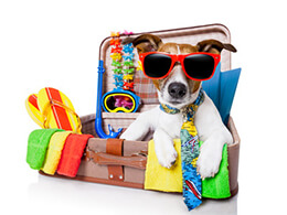 Подорож з собакою