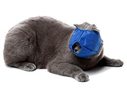 Намордники для котів