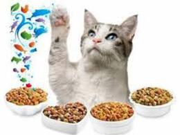 Корми для котів