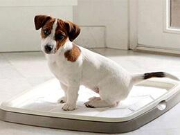 Приучение щенка, коррекция поведения собак